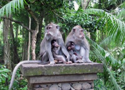 Tempat dan Harga Tiket Masuk Mendala Wisata Wenara Wana – Wisata Hutan Monyet