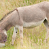 Fifteen teens treated for rabies after gang raping a donkey in Morocco