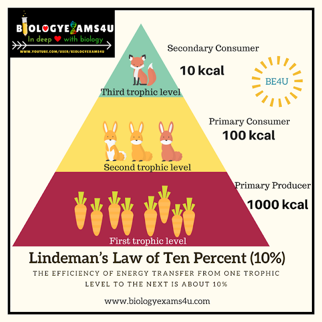 Raymond Lindeman's law of trophic efficiency (Law of 10 percent)