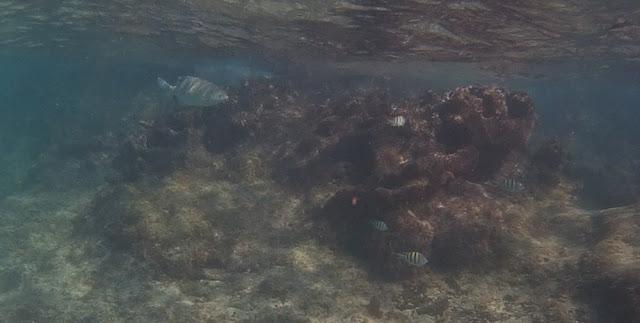 Chankanaab - Riff mit Fischen