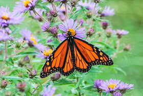 I Love Butterfly's