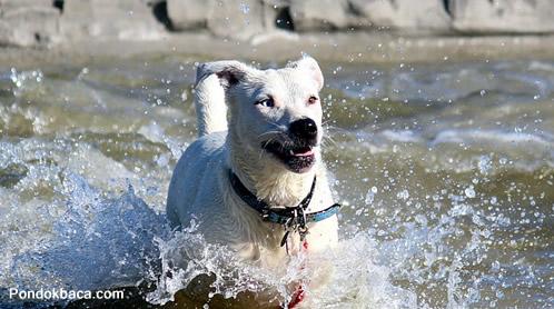 Anjing Serakah dan Bayangannya