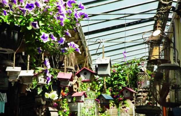 Mercado aux Oiseaux