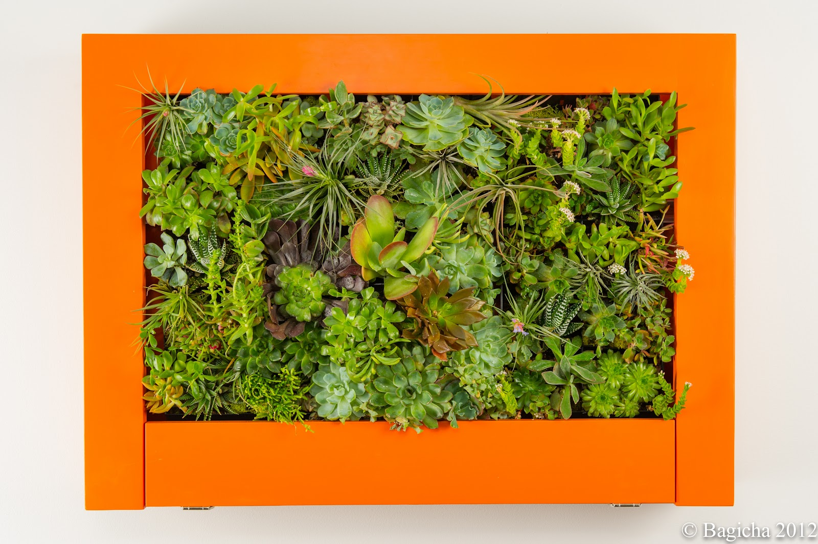 Bagicha ...Garden and Flora Design: Living Wall Art with ...