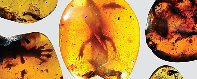 Latest News The world's oldest-chameleon was just uncovered in a 99-million-year-old amber fossil