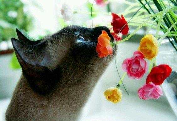 Resultado de imagem para imagens de gatos no jardim