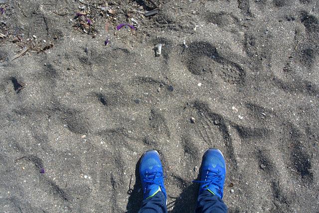 kolor piasku na plażach w Maladze