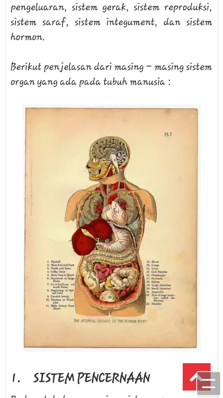 72+ Ide Denah Organ Tubuh Manusia Yang Bisa Anda Tiru