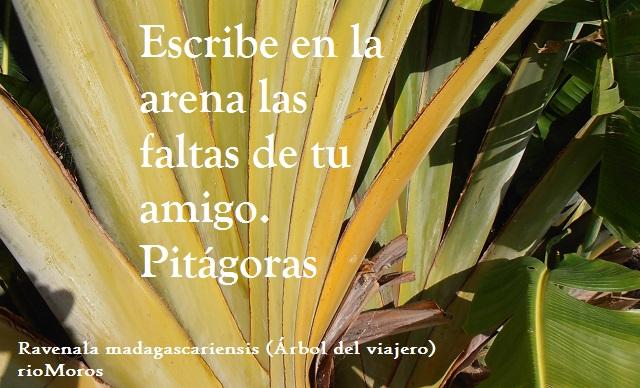 Escribe en la arena las faltas de tu amigo Pitágoras