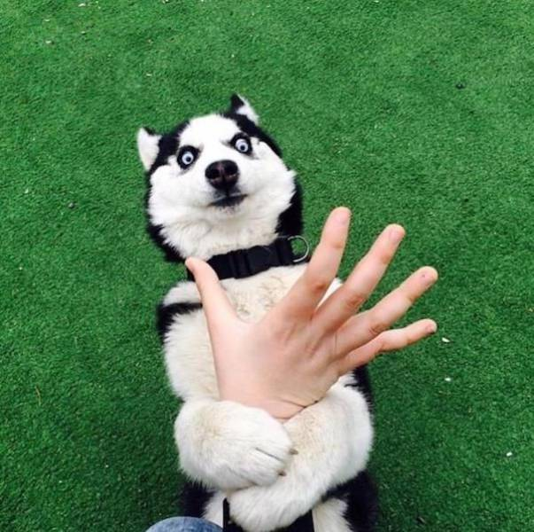 Cute dogs - part 18, funny dog pics, cute dog images