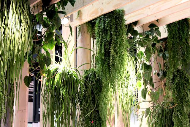 hängende Grünpflanzen