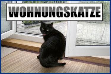 Hauskatzen: Einrichtung Ausstattung Haltung