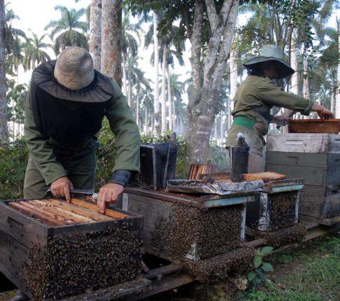 abejas - Apicultores espirituanos 261018 - El Apicultor Español: Actitud y Aptitud Apícola