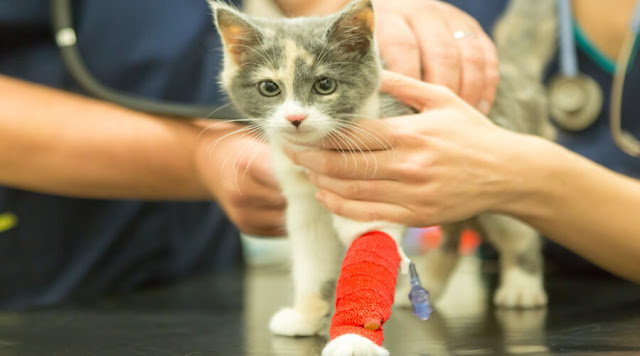 How to nursing a sick cat
