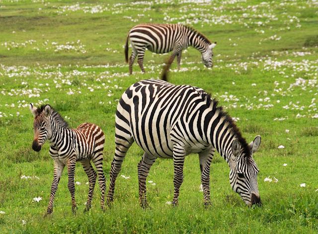 Reserves naturelles en Tanzanie