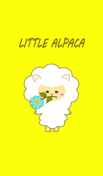 Little alpaca