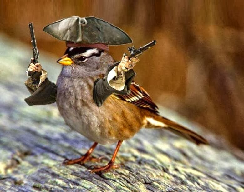 Cute Couples Wallpapers For Facebook Funny Cute Sparrow Interesting Latest Pictures Funny