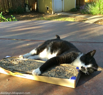 Cat asleep with catnip
