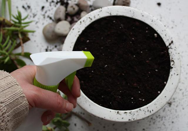 Como fazer um jardim de suculentas
