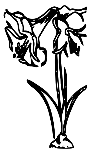 Amaryllis Coloring Pages and Printables