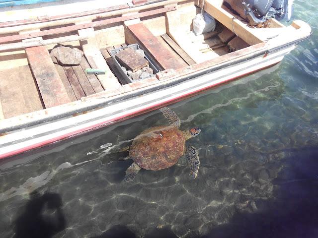 Tortugas de Isla de Pascua