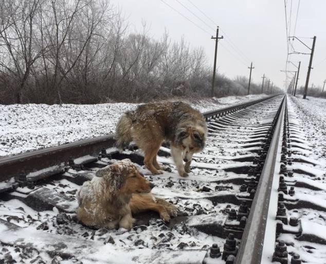 Perro protege a otro cuando el tren les pasa por encima