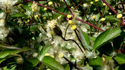 Nunu s garn und stofflabor vom wind eingefangen for Grosartig grafgarten