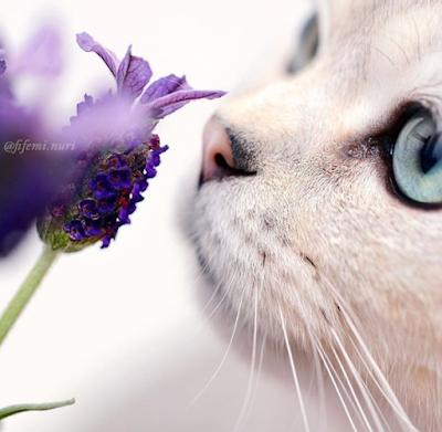 Cat Sniffing behaviour
