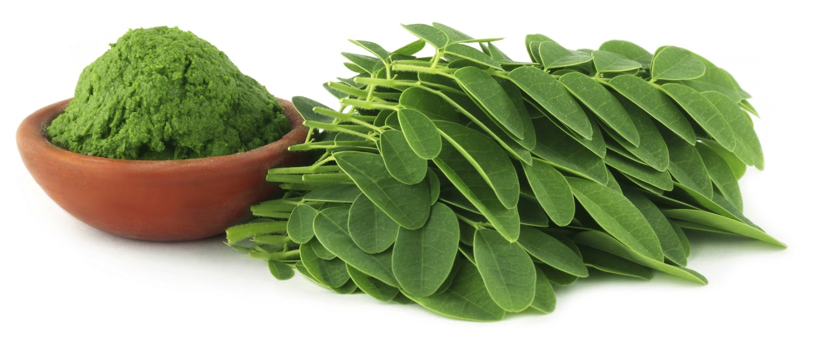 Kandungan daun Kelor dan manfaatnya