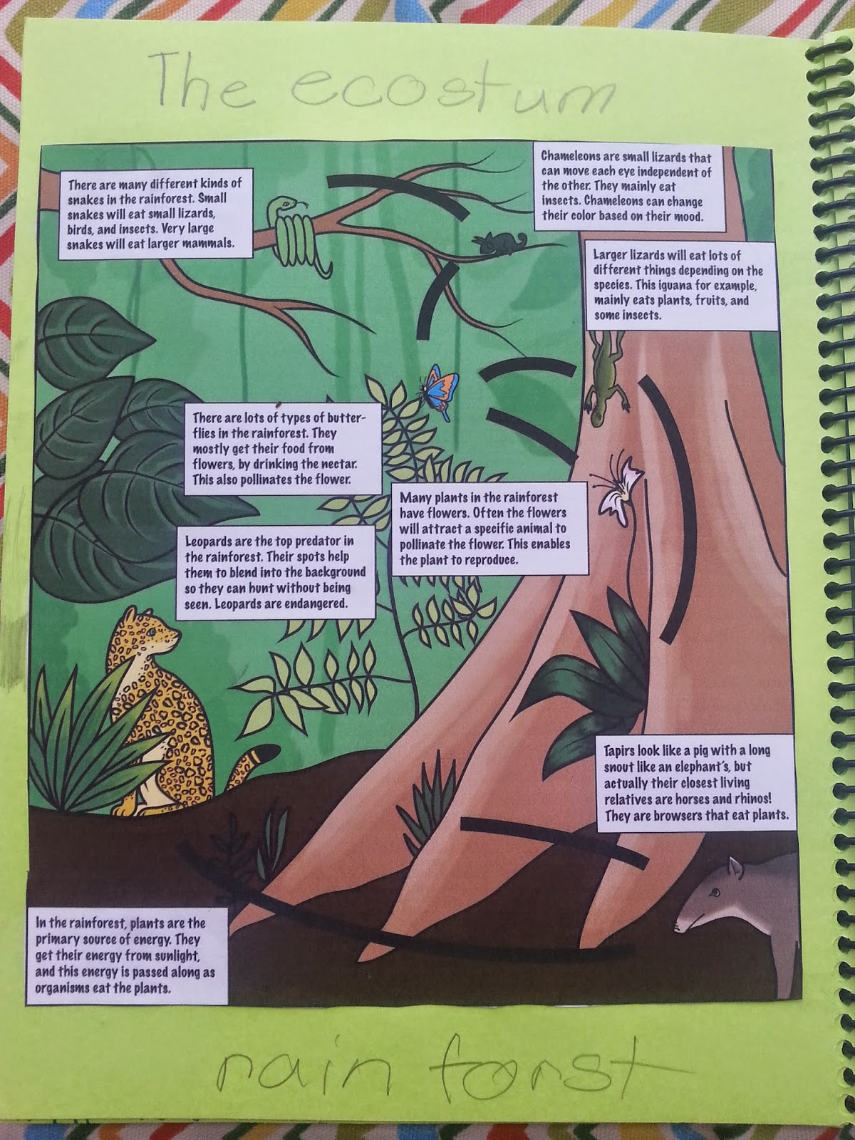 One Mama S Journey Rainforest Biome Unit