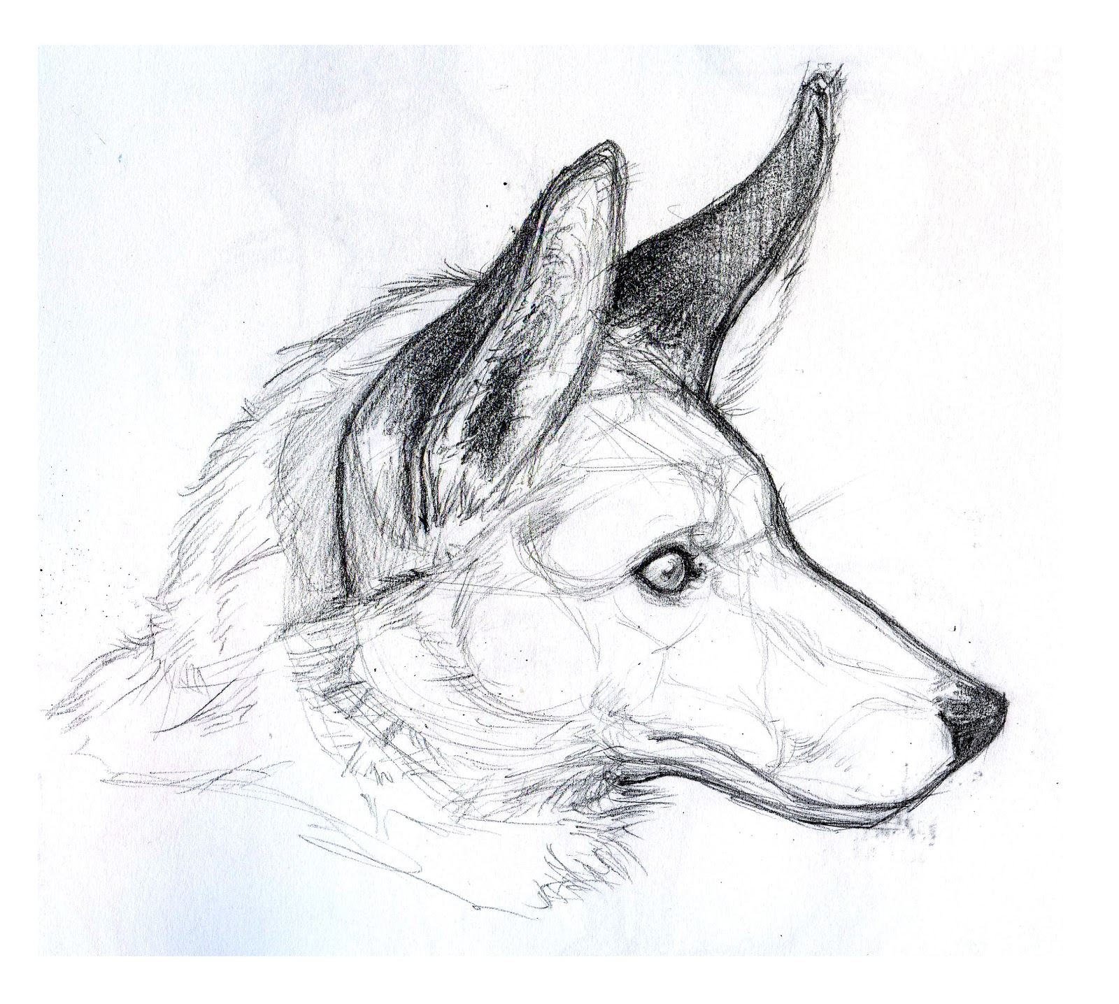 animal drawings stuff kimistry paintingvalley
