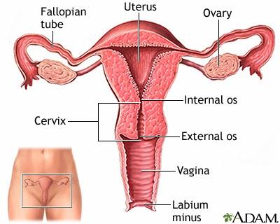 normal uterus atau rahim dan punca sukar hamil