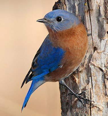 Bluebird nude Nude Photos 24