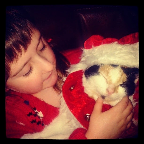, Our Purrfect Christmas with Belle / Five Things Cats do at Christmas