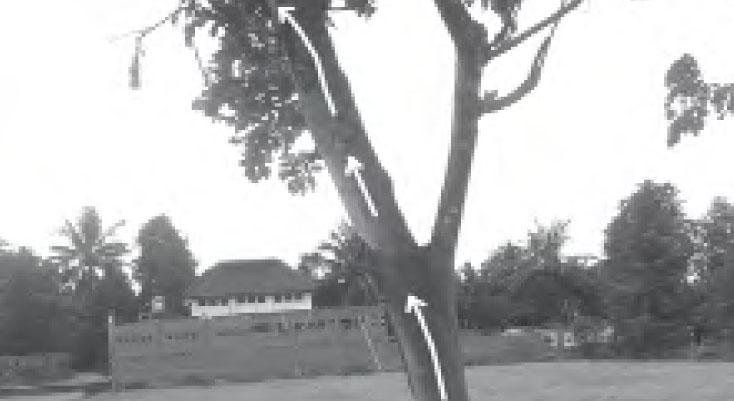 Bagian-Bagian Tumbuhan dan Fungsinya: Fungsi Batang