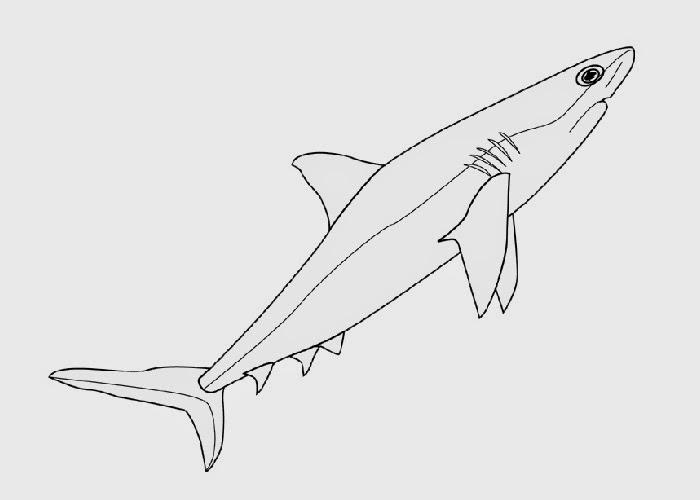 Cute Hammerhead Shark Coloring Page