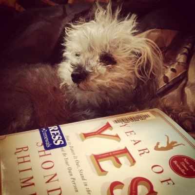 Murchie lies on a bronze comforter, his head raised and twisted to look at something to the viewer's left. In front of him is a small hardcover copy of Year of Yes. Its pale blue cover features the title in large, red letters. A small gold silhouette of a woman with a ponytail performs an enthusiastic leap above the title.
