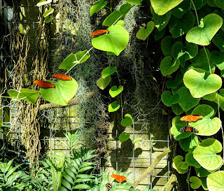 Butterflies at the Calgary Zoo Enmax Conservatory