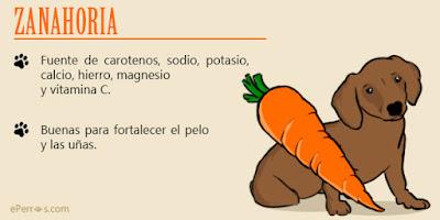 lo mejor de la zanahoria para bichon maltes