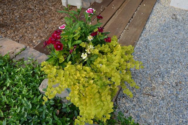 Smart Girls DIY: Weekly garden tour