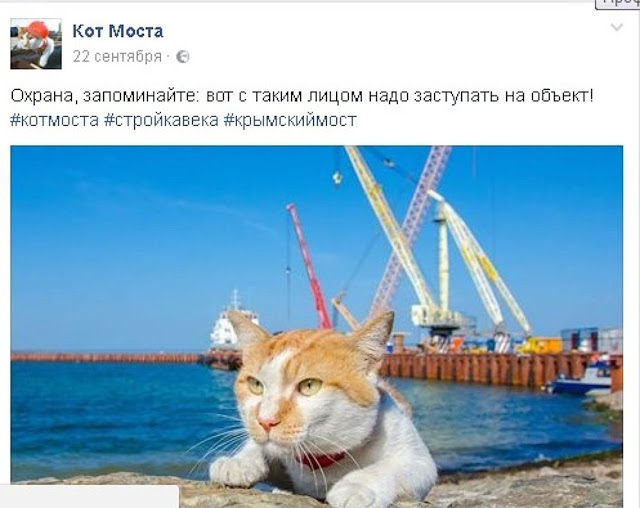 Строители керченского моста устроили обнимашки с котом