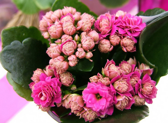 Flores De Interior Faciles De Cultivar Blog Patricia Lopez Diseno - Flores-interior