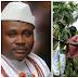 Chief Jite Brown Denies Complicity In Aladja Crisis