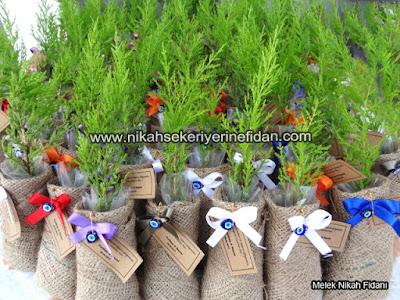 nikah fidanı Antalya Perihan Nazmi 6