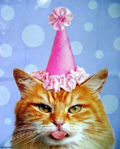 Photo chat mignon anniversaire photo de chat - Photo chat mignon ...