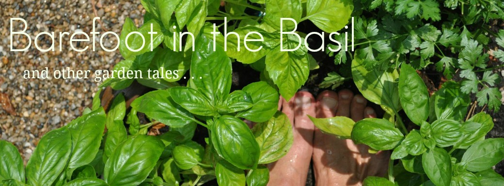 Barefoot in the Basil