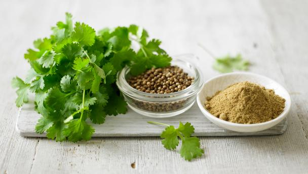 How to grow coriander from seed?