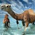 Trump Economic Advisor Throws Multimillion-Dollar Birthday Bash With Camels and Gwen Stefani