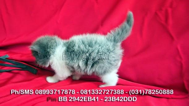 Hamster Dan Kucing Persia Murah Surabaya 04 01 2014 05