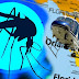 Pesquisadores dizem que o Zika Vírus pode ser transmitido também em muriçocas